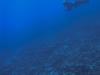 Freediving in Rarotonga