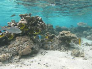 Rarotonga's Lagoon