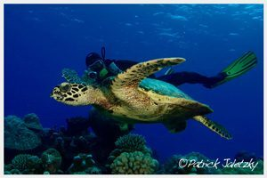 Turtle and photographer on PADI Advanced Open Water Diver course in Rarotonga