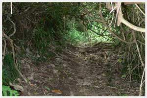 Bush during Raemaru mountain trek in Rarotonga