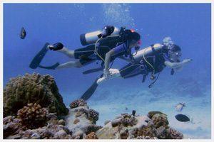 Divers during PADI Open Water Diver course in Rarotonga