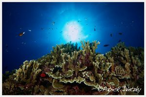 Reef dive during PADI scuba diver course